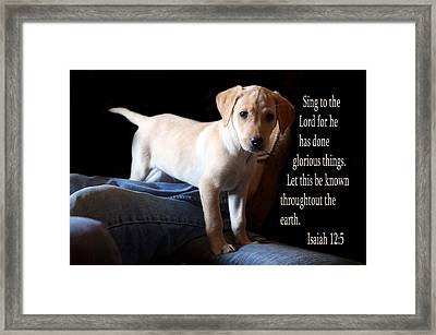 Labadore Puppy Is. 12v5 Framed Print by Linda Phelps