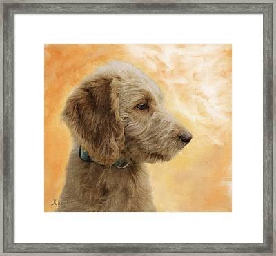 Labradoodle Puppy Framed Print