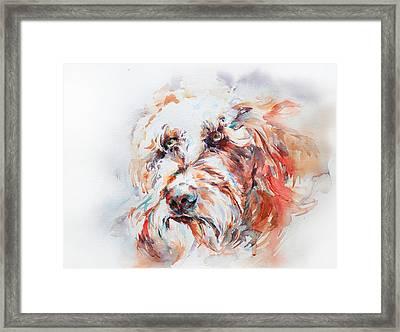 Labradoodle Framed Print by Stephie Butler