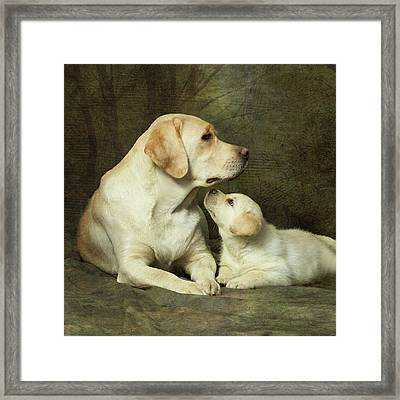Labrador Dog Breed With Her Puppy Framed Print