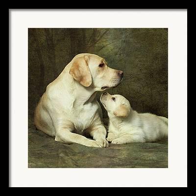 Retriever Puppies Framed Prints