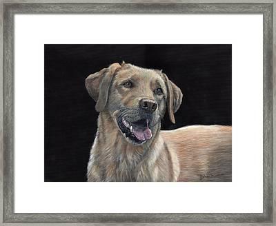 Labrador Portrait Framed Print