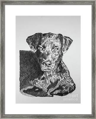 Labrador Portrait Framed Print by Robert Yaeger