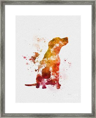 Labrador Framed Print by Rebecca Jenkins