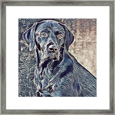 Labrador Retriever - Black Lab Dog Framed Print by Mike Rabe