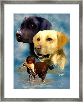 Labrador Retrievers Framed Print