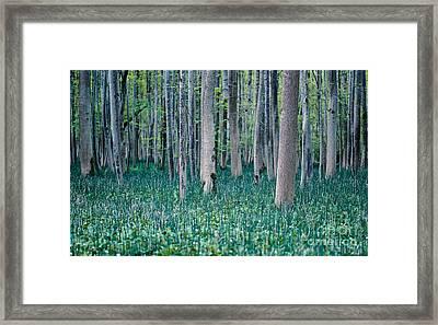 Labyrinth Framed Print by Alexander Kunz