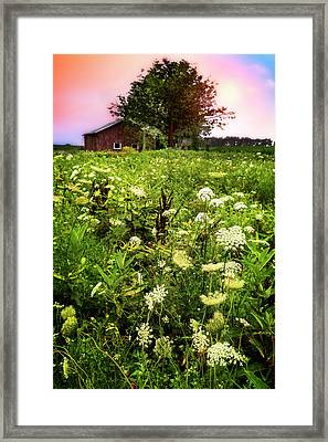 Lace At Sunset II  Framed Print by Debra and Dave Vanderlaan