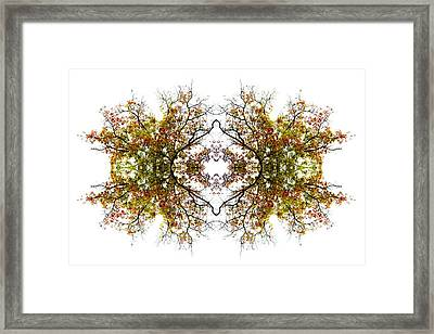 Lace Framed Print by Debra and Dave Vanderlaan