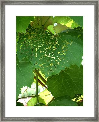 Lace In The Vines Framed Print by Mindy Newman