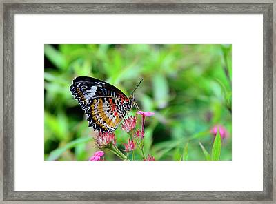 Framed Print featuring the photograph Lace Wing Butterfly by Corinne Rhode
