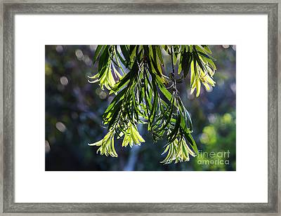 Lacey Leaves Framed Print