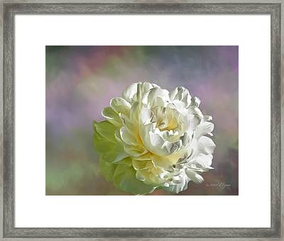 Lacy Framed Print by Elzire S