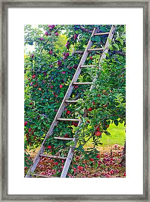 Ladder To The Top Framed Print