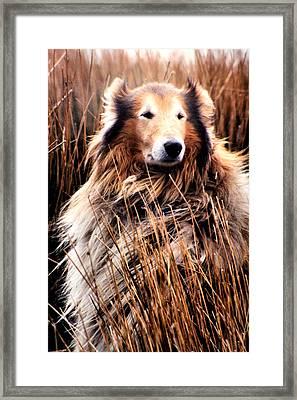 Laddie In Charge Framed Print by Ellen Lerner ODonnell