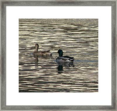 Ladies First Framed Print by Hasani Blue