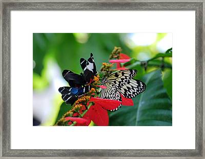 Framed Print featuring the photograph Ladies Of Color by Teresa Blanton
