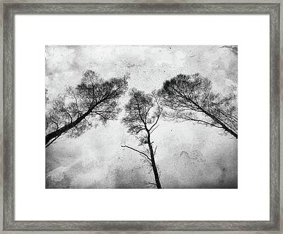 Ladies Of The Woods Framed Print