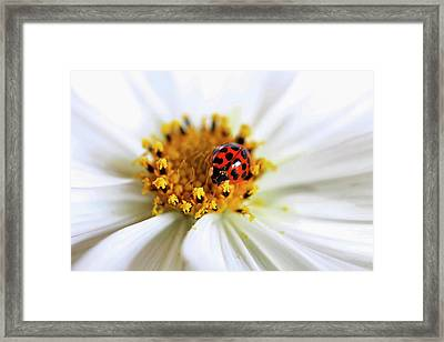 Lady Bug And Her Cosmo Framed Print