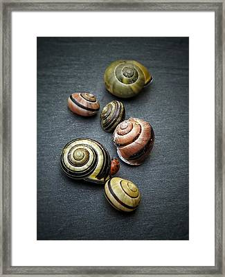Lady Bug And Snail Shells 1 Framed Print