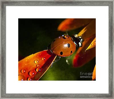 Lady Bug Bridge Framed Print