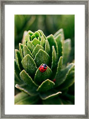 Lady Bug - Detailed Image Of A Red With Black Spots Lady Bug Framed Print by Nature  Photographer