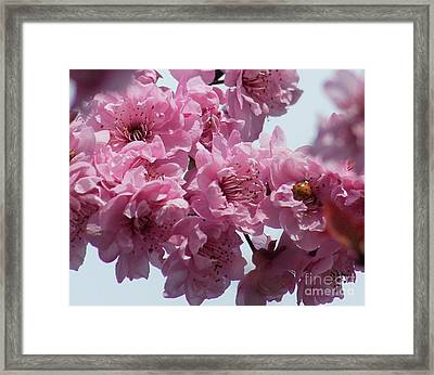Framed Print featuring the photograph Lady Bug by Victor K