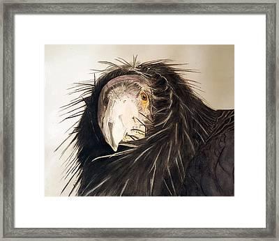 Lady Condor Framed Print by Jodi Schneider