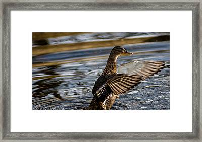 Lady Duck Framed Print