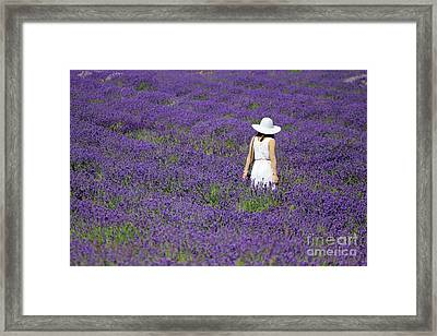 Lady In Lavender Field Framed Print