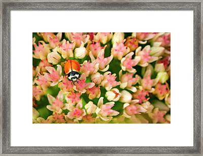 Lady In The Garden Framed Print