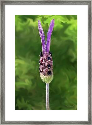 Lady Lavender Framed Print