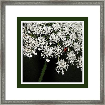 Lady On Lace Framed Print by Ginger Howland