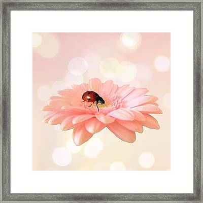 Lady On Pink Framed Print