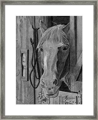 Lady - Print Framed Print by Christina Steward