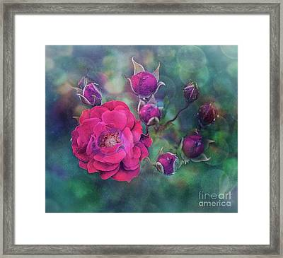 Lady Rose Framed Print by Agnieszka Mlicka