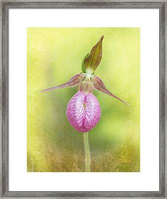 Lady Slipper Orchid Fantasy Framed Print