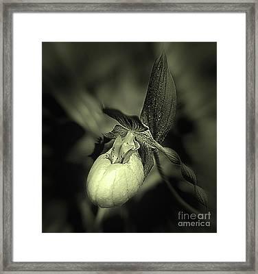 Lady Slipper Orchid Flower Framed Print