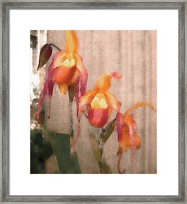 Lady Slipper Orchids Framed Print