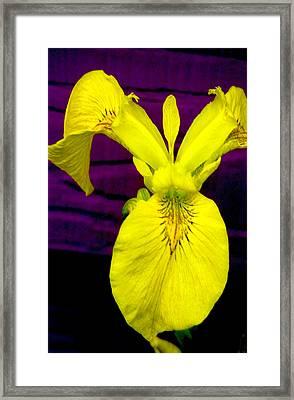 Lady Slipper Framed Print by Patricia Ridlon
