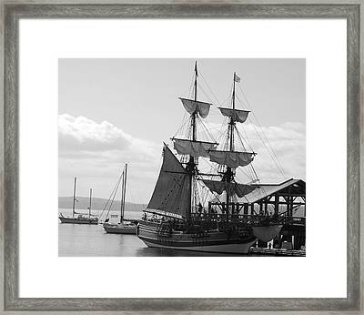 Lady Washington Framed Print by Sonja Anderson