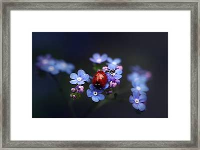 Ladybird And Ant Framed Print by Ellen van Deelen