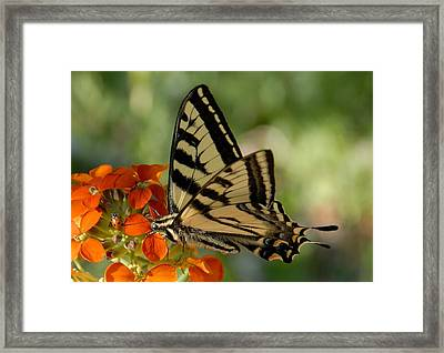 Ladybug And Tigertail Framed Print by David Lee Thompson
