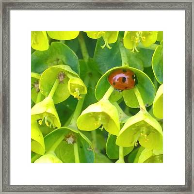 #ladybug Found Some Shelter From The Framed Print
