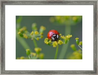 Ladybug In Red Framed Print