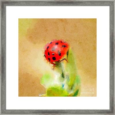 Ladybug Ladybug Ladybug Framed Print
