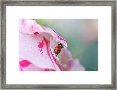 Ladybug Lifting Petal Framed Print