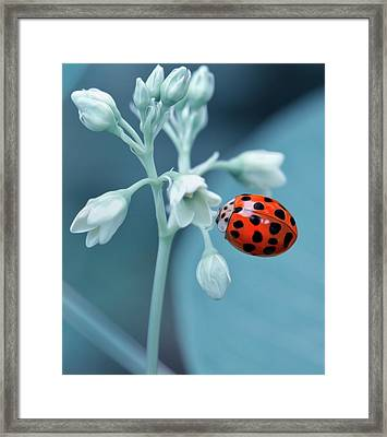Framed Print featuring the photograph Ladybug by Mark Fuller