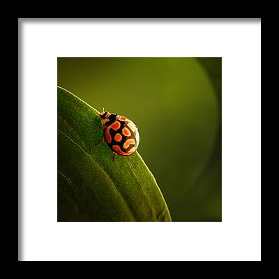 Insect Framed Prints