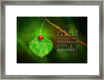 Ladybug On Leaf Thousand Miracles Quote Framed Print